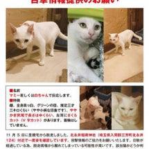 """""""リアル猫活動「マミ…"""
