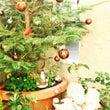 クリスマスツリーの日…