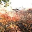 京都東福寺紅葉散策と…