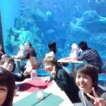 男鹿水族館GAO