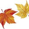 11月23日(木)祝日診療のお知らせの画像