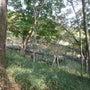 多摩動物公園(201…