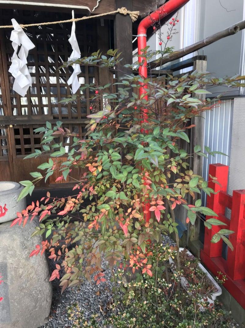 た は に が 植え 理由 多く られ 江戸 南天 時代 家 の