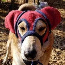 マスクだょ