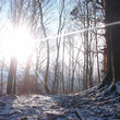 雪に逸る日々