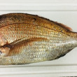 創作塩つけ麺「真鯛」