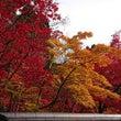 紅葉狩りin京都