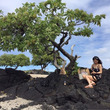 ハワイ島WS UPし…