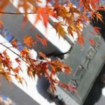 静寂の亀田八幡宮