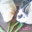 小松菜&お茶目さん♪