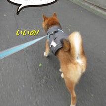 『ボッチ散歩はいや!…