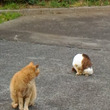 のら猫さんフタリと友…