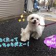 金曜日の幼稚園★(犬…