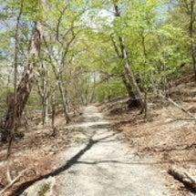 中禅寺湖 鱒と風景