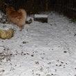 初雪降りました。