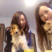 愛犬たちの戯れ会