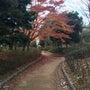 東高値森林公園の紅葉
