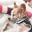 ご家族の「愛犬介護の…