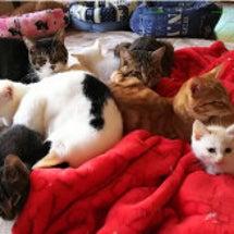 宝探しみたいな猫団子
