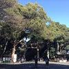明治神宮&代々木八幡宮への神社参拝ツアーの画像