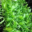 万田酵素で野菜を育て…