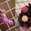 冬花壇の準備と夏の花…