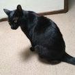 帰ってきた黒猫