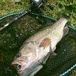 大雑把な釣りin遠賀…