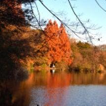 石神井公園 メタセコ…