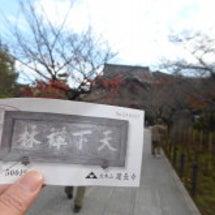 鎌倉の紅葉 天園ハイ…