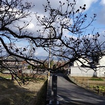 関西花の寺二十五ヵ所…