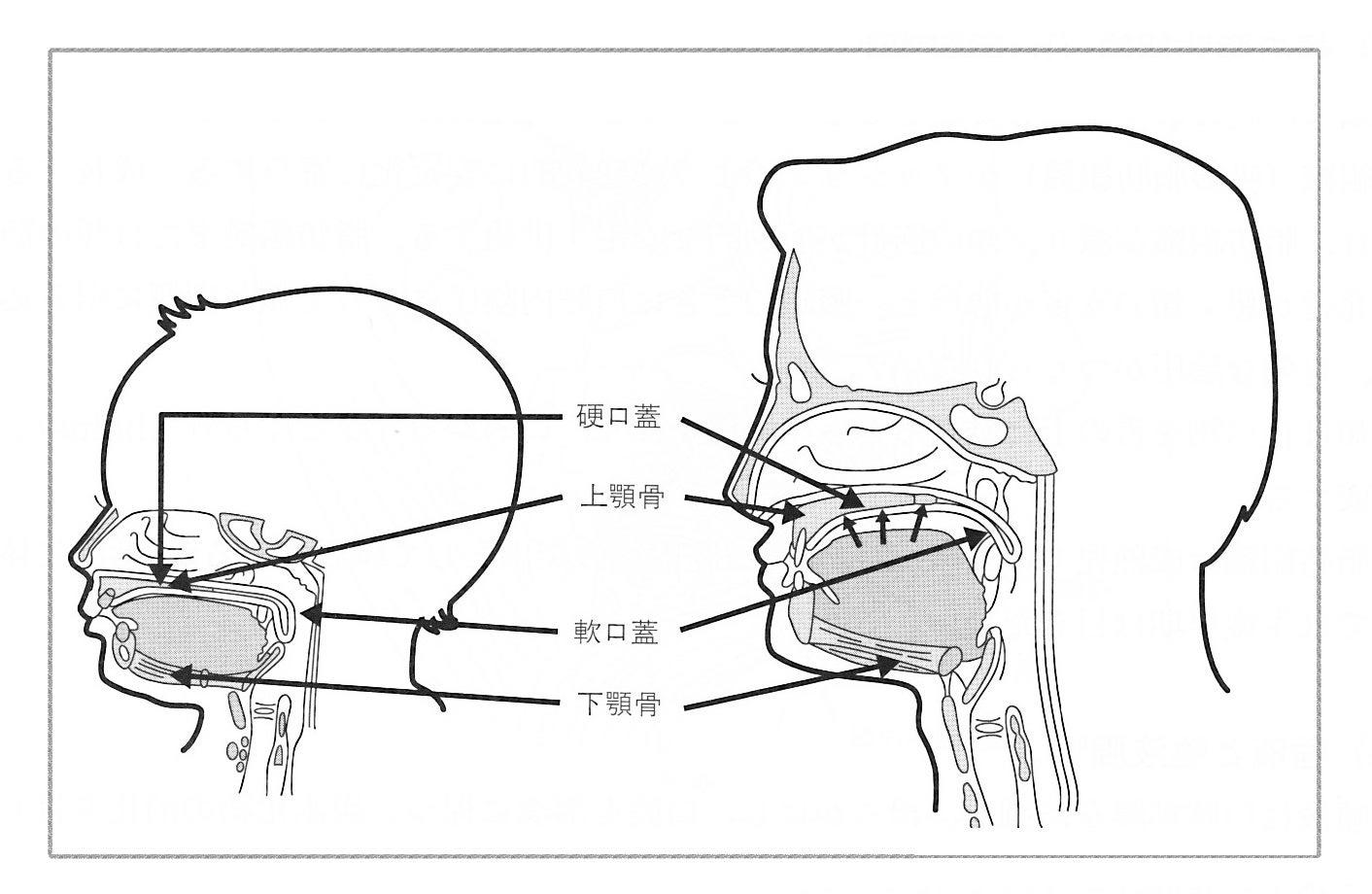 赤ちゃんの発達と舌の動きの関係