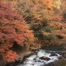 晩秋の箱根は紅葉が綺…