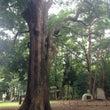 おススメです!木の瞑…