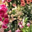 春のかわいいお花が好…