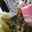 保護子猫の小太郎…