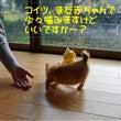 No.1625 右京…