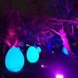 チームラボ 城跡の光…
