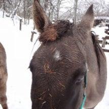 雪の中でくっついたも…