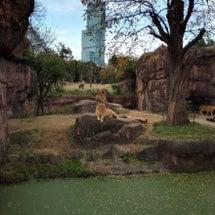 動物園へ♡