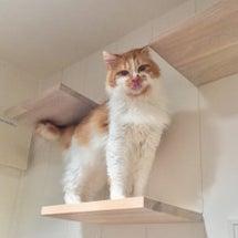 里親さん募集中の子猫…