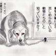 """""""実験犬"""""""