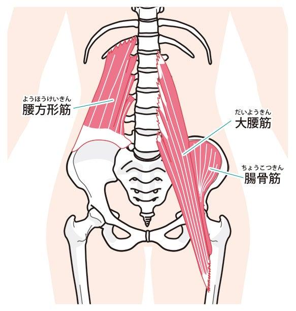 ナイファンチ立ち、大腰筋・腸骨筋を伸展させる | はみ唐さん日記(空手・地域史・そして家族)