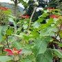 ハナマナガーデンの花
