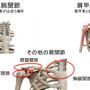 肩甲骨の運動を点検し…