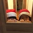 毎年恒例のクリスマス…