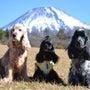 今日も富士山ネタ