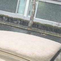 雪です・・・