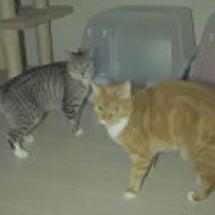 夜中の猫!影の動きが…