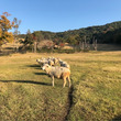 放牧場の住人たち